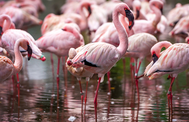 follow-the-colours-curiosidades-cor-rosa-09