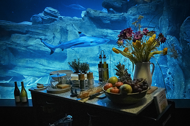 follow-the-colours-airbnb-quarto-embaixo-dagua-aquario-tubaroes-06