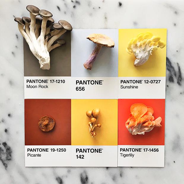 follow-the-colours-pantone-posts-lucy-Litman-01