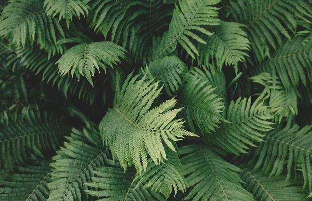 capa-samambaia-follow-the-colours-plantas-purificam-ar-nasa