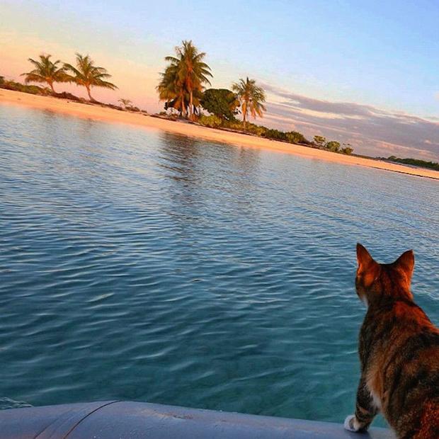follow-the-colours-gato-barco-viagem-Liz Clark-04