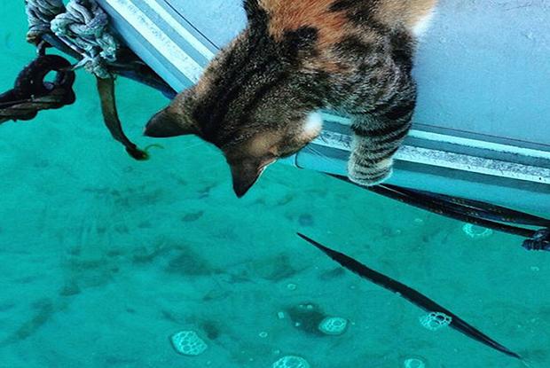 follow-the-colours-gato-barco-viagem-Liz Clark-11