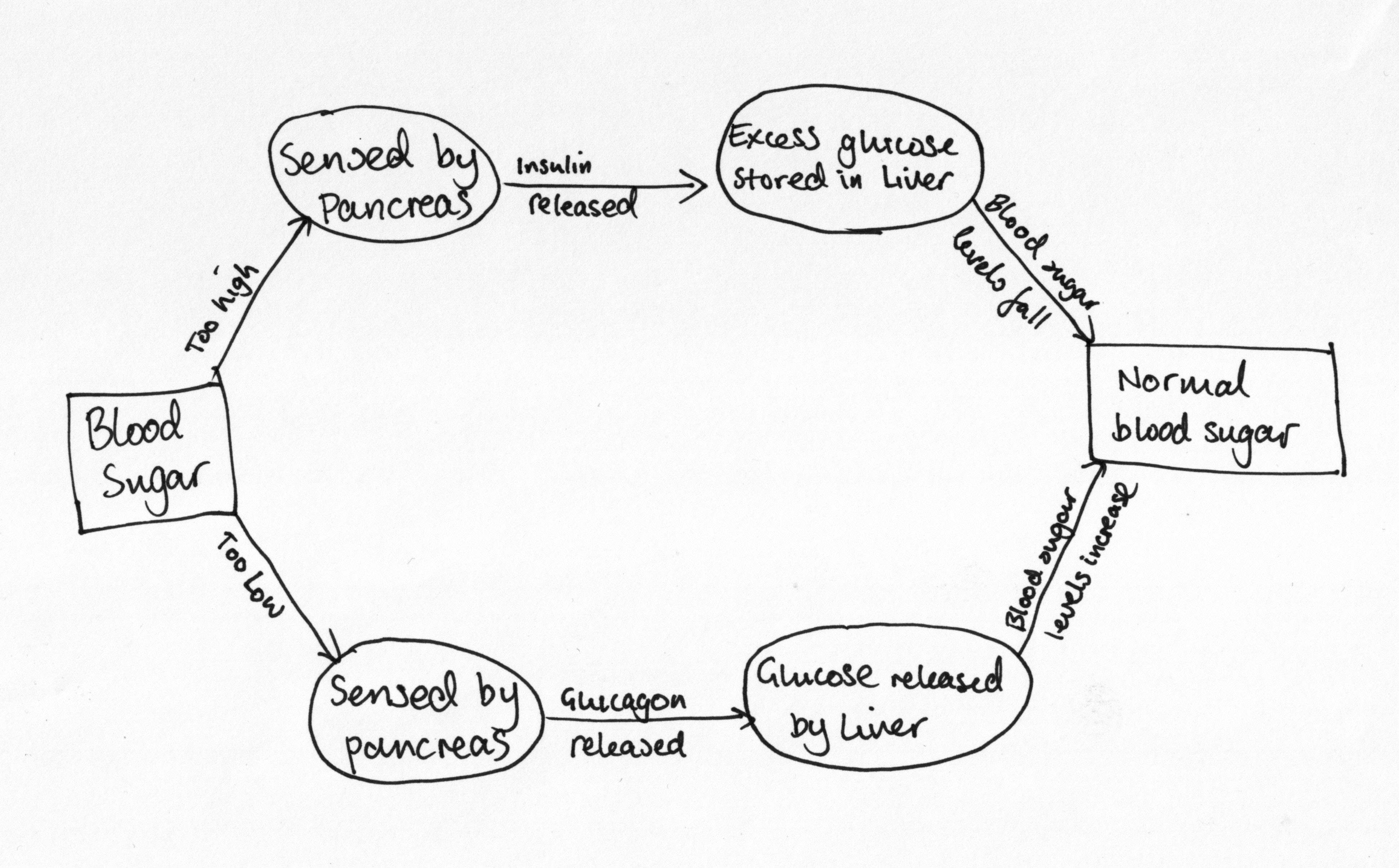 diagram of blood sugar