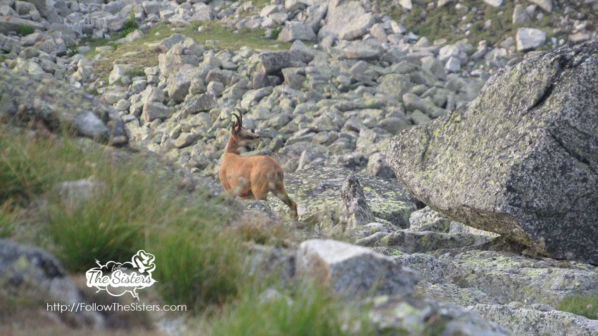 Discovering new wild friends in Mount Rila