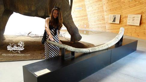 Next to the actual remains of tusks from mammoths in Dorkovo