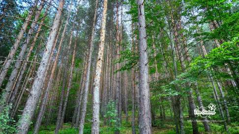 The forest around the dancing bears park in Belitsa