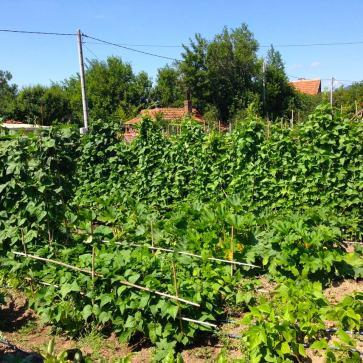 sliven-bio-garden2