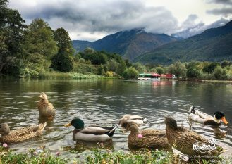 the ducks in park Rila, Dupnitsa