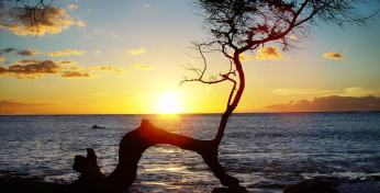 Planning The Perfect Honolulu Vacation