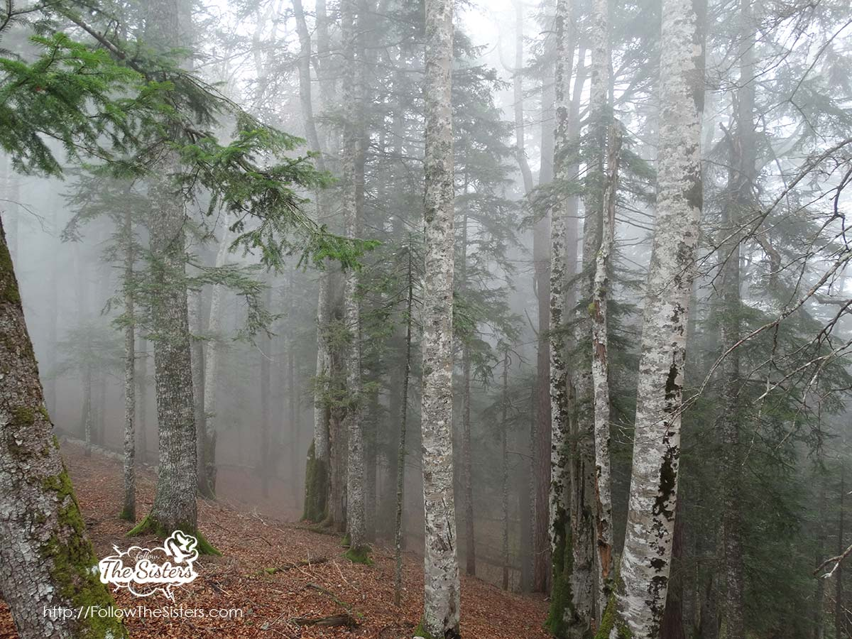 Foggy Forest in Bosnia and Herzegovina