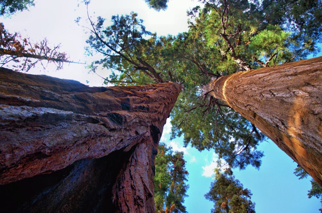 What to see in Sequoia National Park - the biggest trees