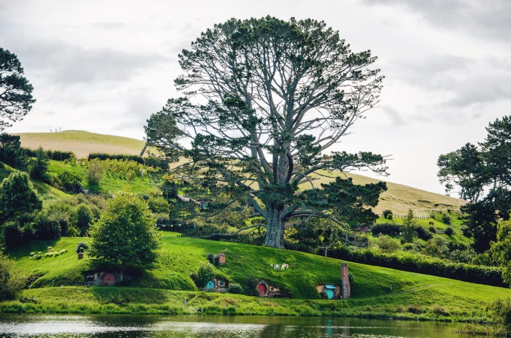 visiting hobbiton - hobbit village in New Zealand - the oak in hobbiton