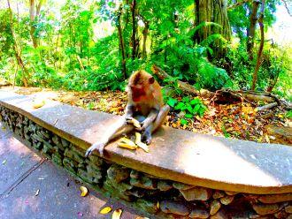 Ein Tag im Monkeyforest Ubud