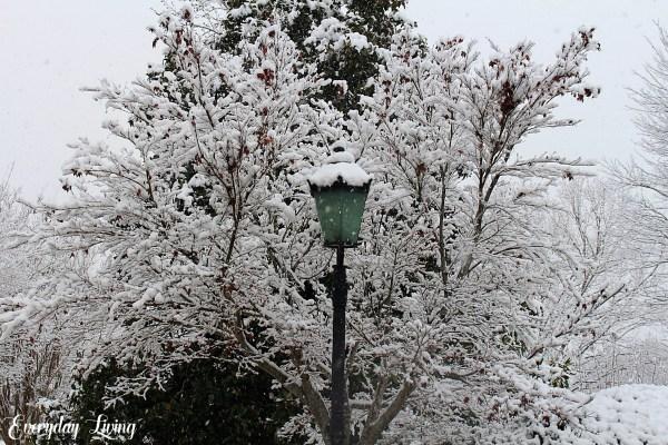 Amazing snow photography