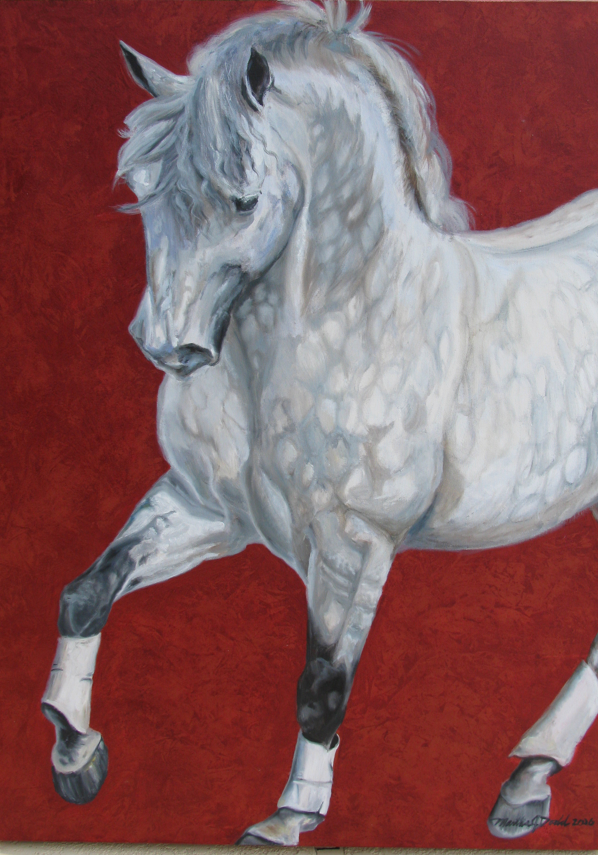 Lusitano Stallion wall art