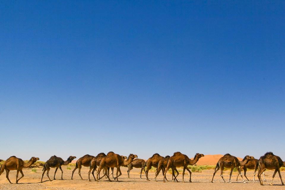 201505_MoroccoFossilHunting-0431