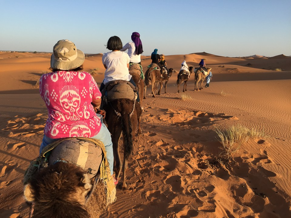 201505_morocco_camel-3438