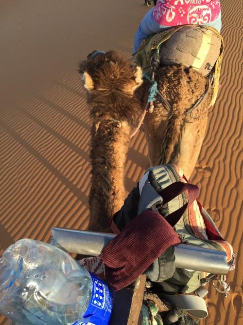 201505_morocco_camel-3460