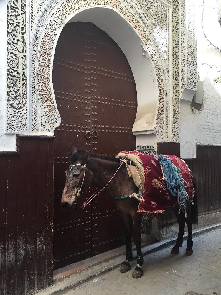 201505_Morocco_iphone-2770