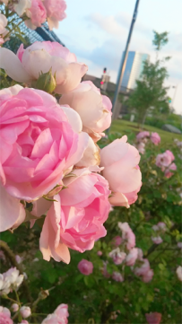Pink-flowers-depression-business