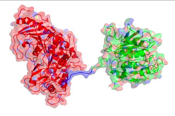 enzimas plástico