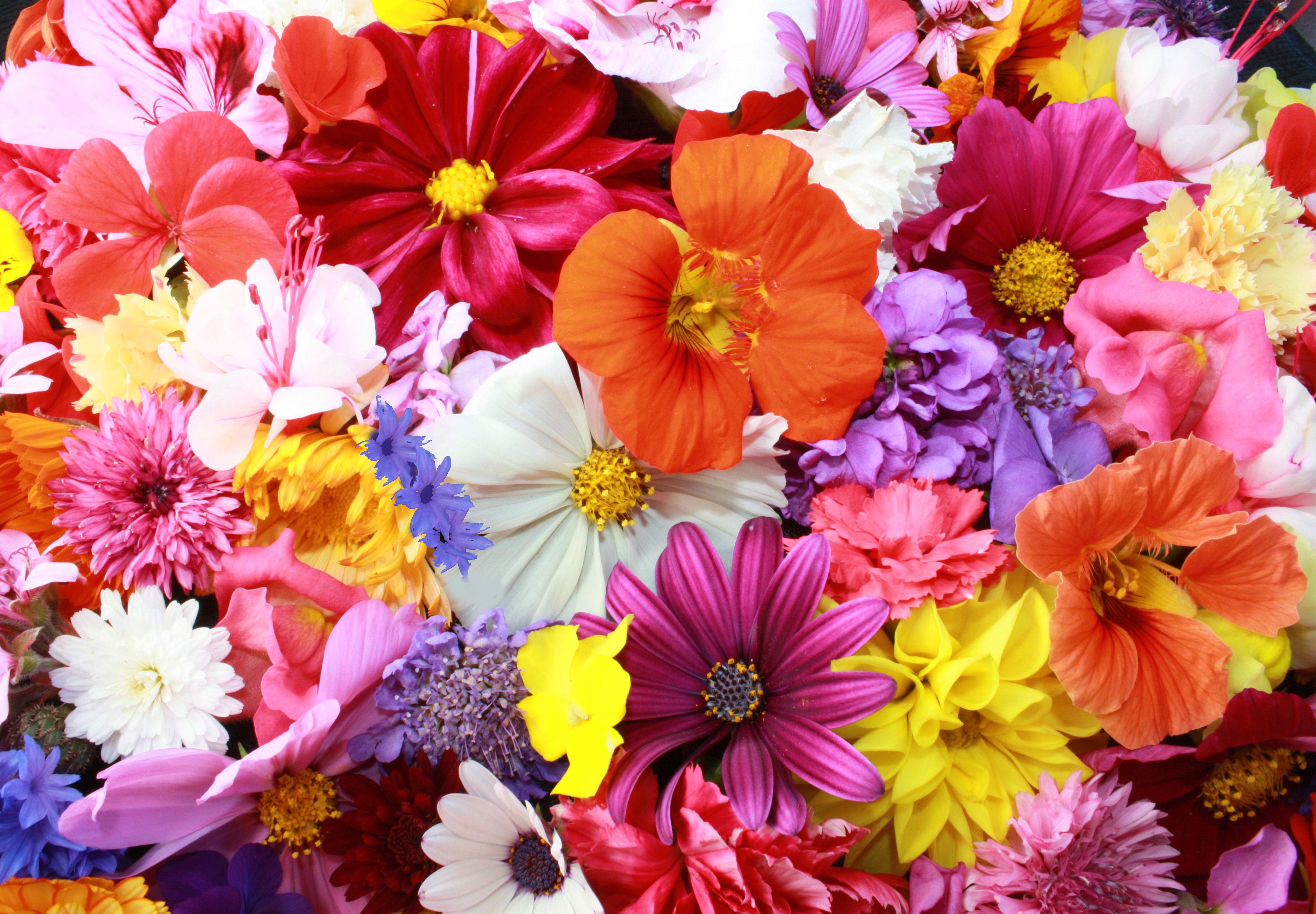 Edible Flowers  Fresh Origins