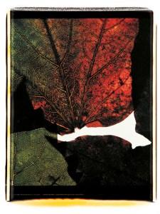 Voyage inside a leaf