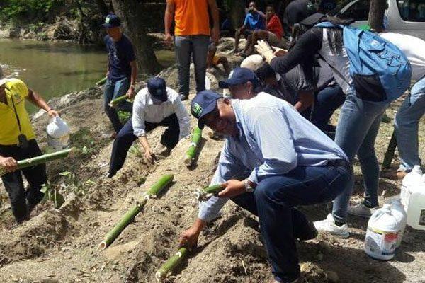 Siembran bambúes para reforestar cuenca del río Bajabonico en Altamira