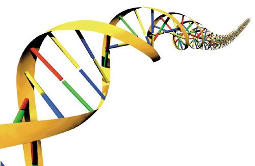 exame dna gratis - Exame de DNA Gratuito: Como e Onde Fazer?