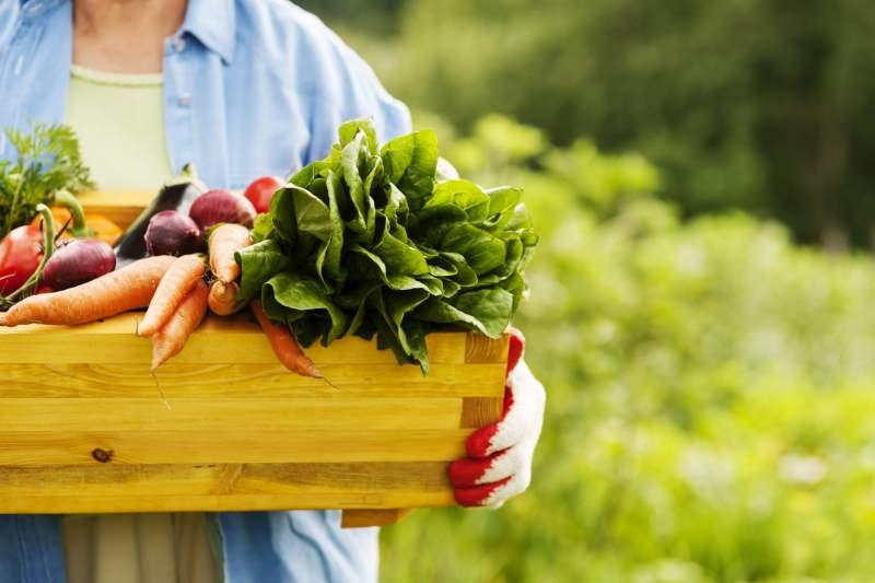 alimentos orgânicos 2 - Diferenças entre os alimentos orgânicos e os comuns