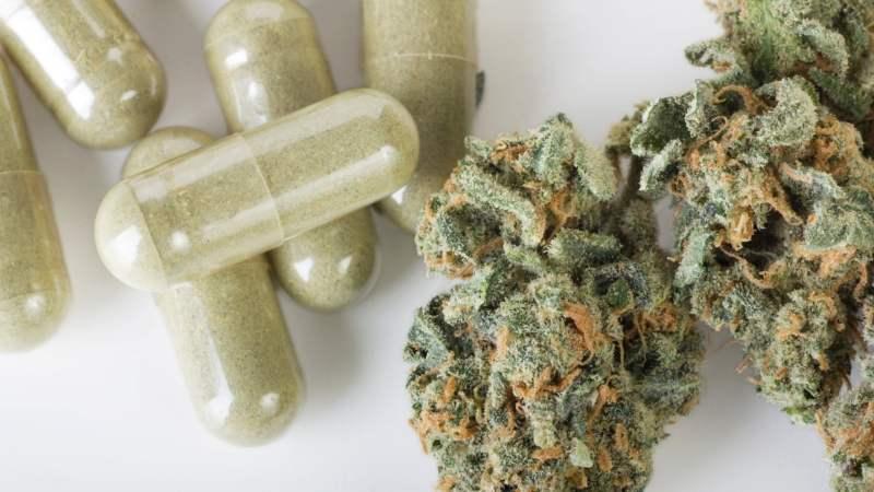 1 11 1024x576 - Maconha medicinal: Quais Doenças podem ser Tratadas?
