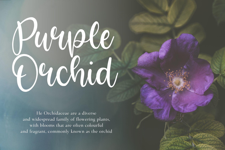 Bright Violet2
