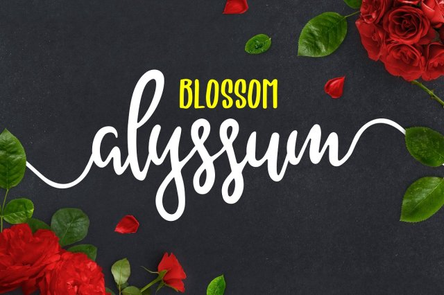 Alyssum Script