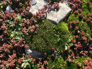 Close up of small plants growing on the ground of the mountain