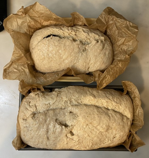 The two loaves, scored, right before baking