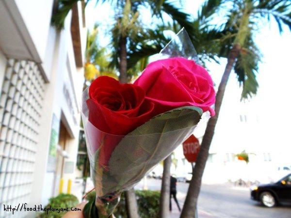 miami-roses