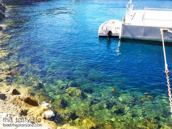clear-water-orange-fishies