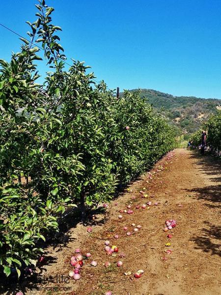orchard-aisles