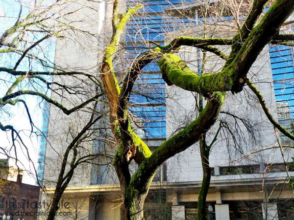 mossy-trees-portland