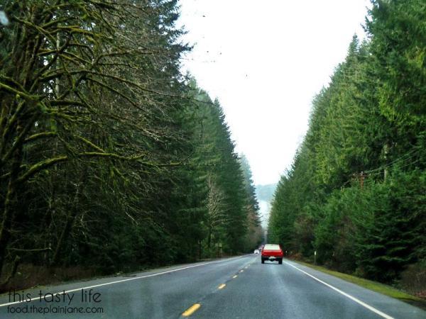 tillamook-forest-trees
