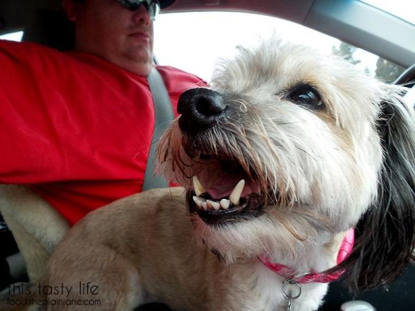 road-trip-dog