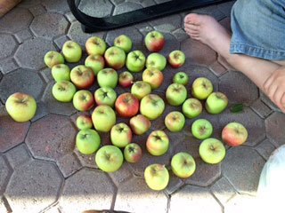 apple-haul