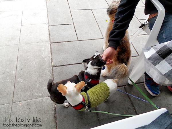 Dog Friendly Outdoor Tables at Suzy Q's Diner - Escondido, CA