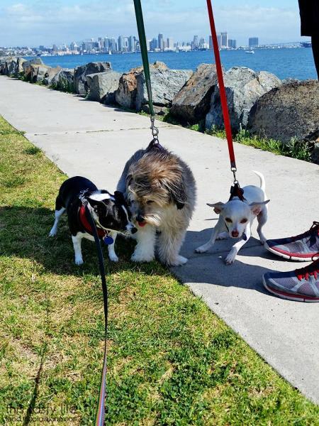 blow-away-puppies