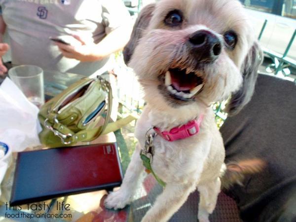 happy-blurry-dog