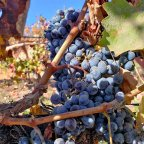 Maintaining Control + a Visit to Temecula Wineries!