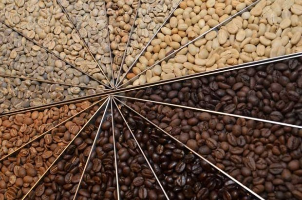 Coffee Wheel of Different Roasts of Coffee Beans Flavor Profiles