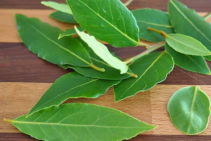 How to Use Bay Leaves in Cooking for a Sweet Woodsy Flavor | Foodal