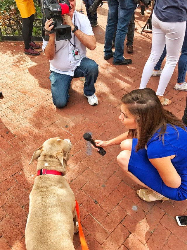 Someone Actually Interviewed A Dog About The Comey Hearing