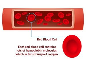 Red Blood Cells and Iron